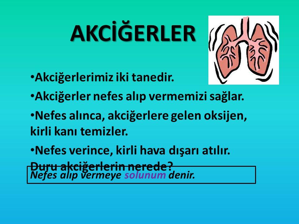 AKCİĞERLER Akciğerlerimiz iki tanedir. Akciğerler nefes alıp vermemizi sağlar. Nefes alınca, akciğerlere gelen oksijen, kirli kanı temizler. Nefes ver