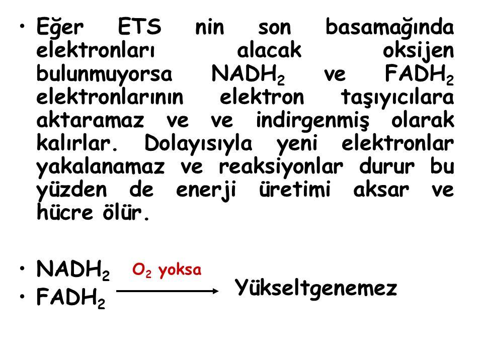 Eğer ETS nin son basamağında elektronları alacak oksijen bulunmuyorsa NADH 2 ve FADH 2 elektronlarının elektron taşıyıcılara aktaramaz ve ve indirgenmiş olarak kalırlar.