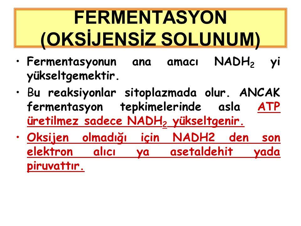 Fermentasyonun ana amacı NADH 2 yi yükseltgemektir.
