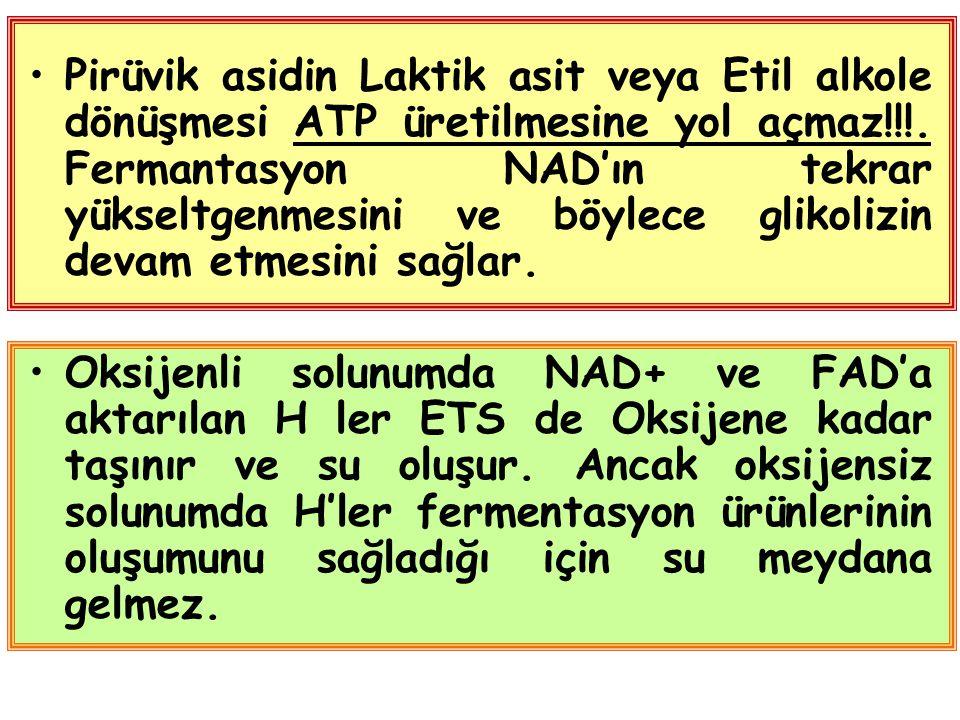 Pirüvik asidin Laktik asit veya Etil alkole dönüşmesi ATP üretilmesine yol açmaz!!!.