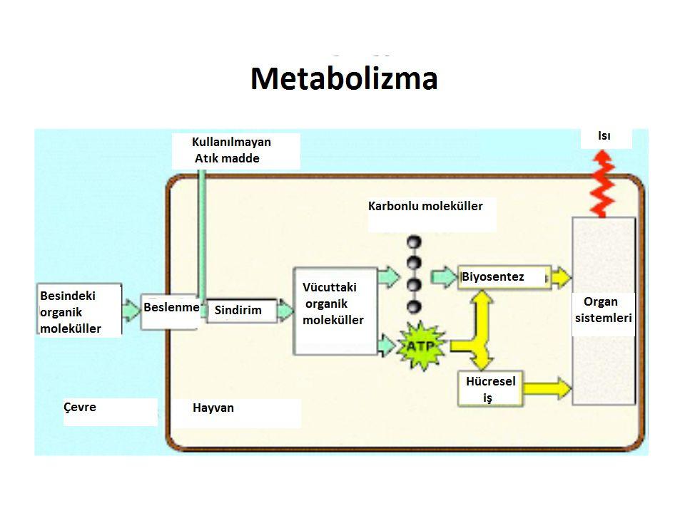 OKSİJENSİZOKSİJENLİ SitoplazmaSitoplazma ve Mitokondri Glikoz tam parçalanmaz (Son ürün organik) Glikoz CO 2 ve suya parçalanır (Son ürün inorganik) ETS yokETS kullanılır ( Asıl ATP üretimi oksidatif f.