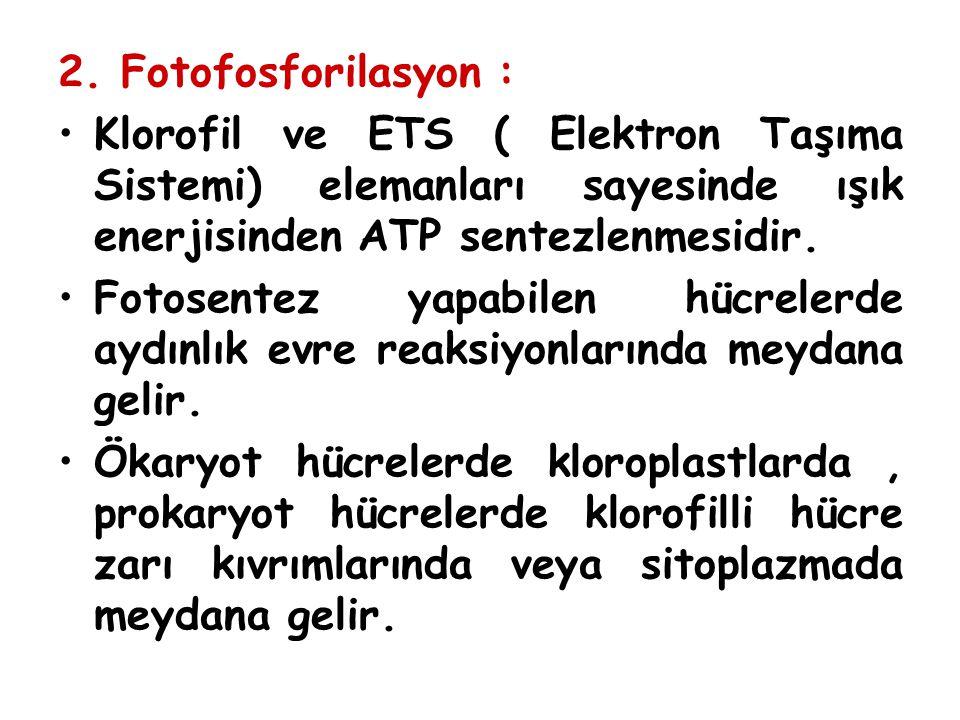 2. Fotofosforilasyon : Klorofil ve ETS ( Elektron Taşıma Sistemi) elemanları sayesinde ışık enerjisinden ATP sentezlenmesidir. Fotosentez yapabilen hü