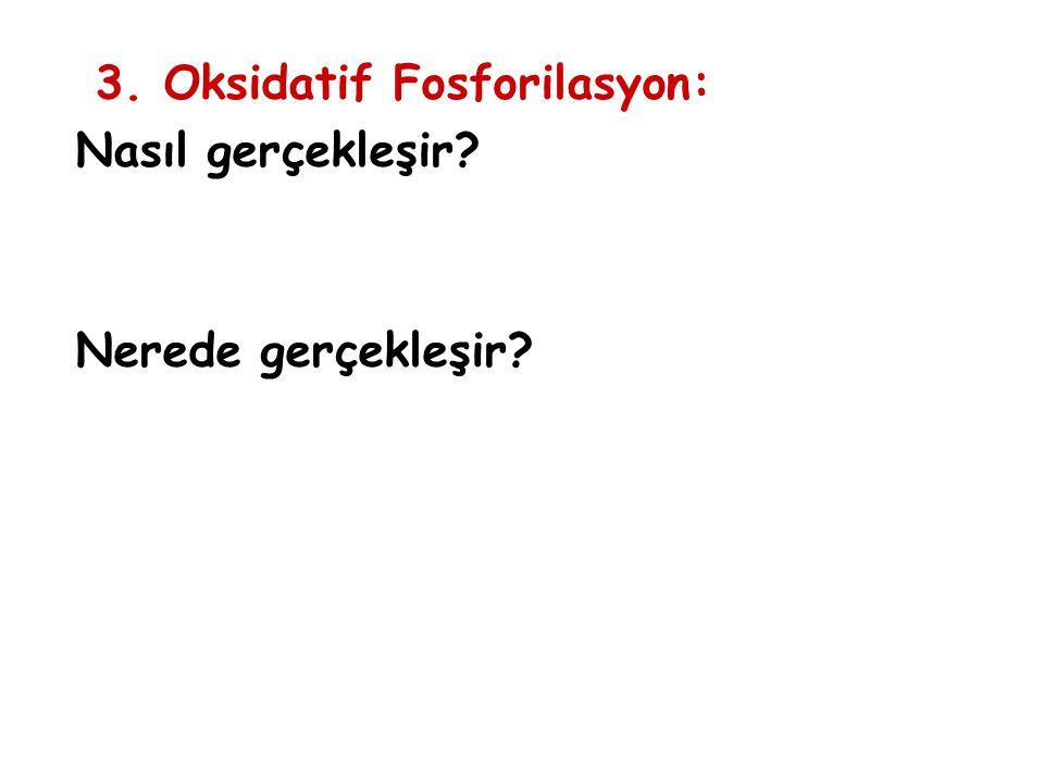 3. Oksidatif Fosforilasyon: Nasıl gerçekleşir? Nerede gerçekleşir?