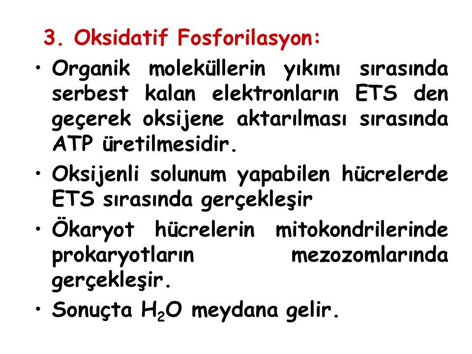 3. Oksidatif Fosforilasyon: Organik moleküllerin yıkımı sırasında serbest kalan elektronların ETS den geçerek oksijene aktarılması sırasında ATP üreti