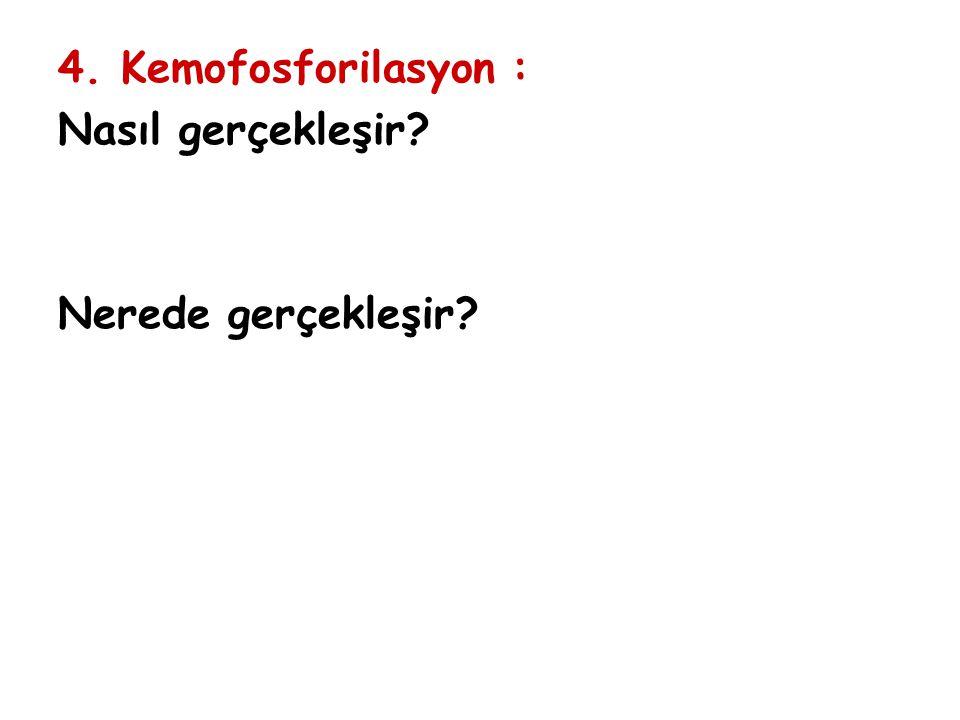 4. Kemofosforilasyon : Nasıl gerçekleşir? Nerede gerçekleşir?