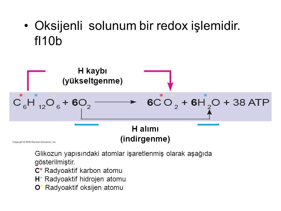 Glikoz H kaybı (yükseltgenme) H alımı (indirgenme) (ATP) Oksijenli solunum bir redox işlemidir.
