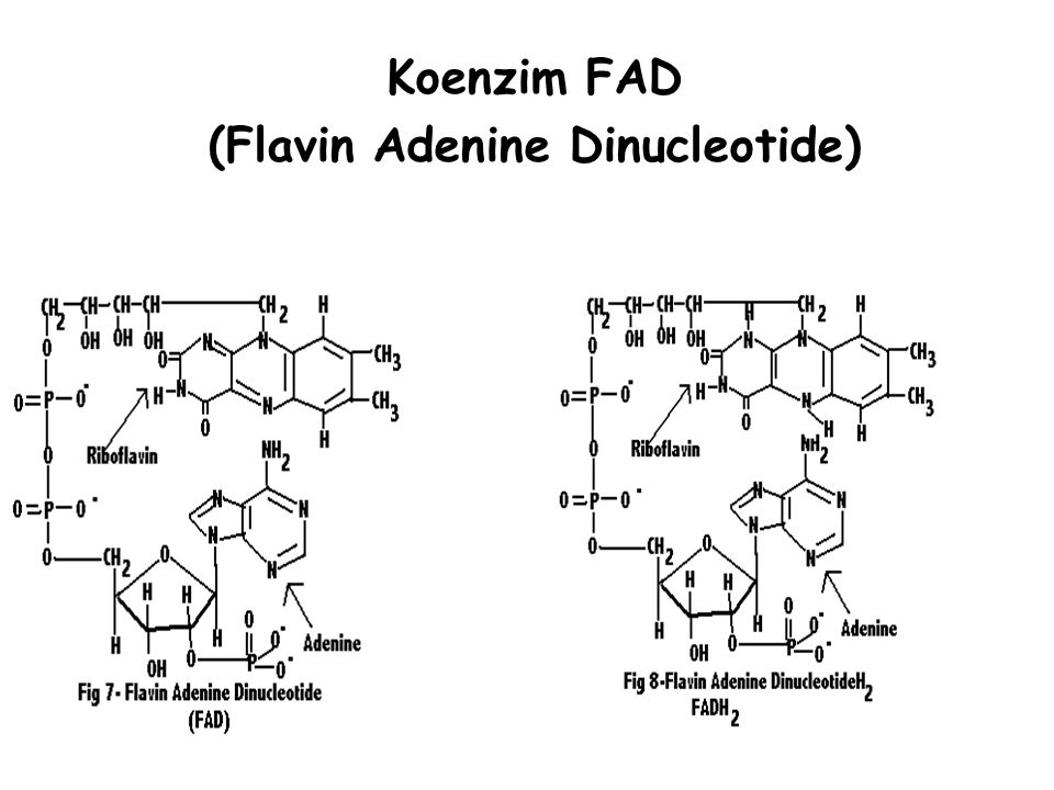 Koenzim FAD (Flavin Adenine Dinucleotide)