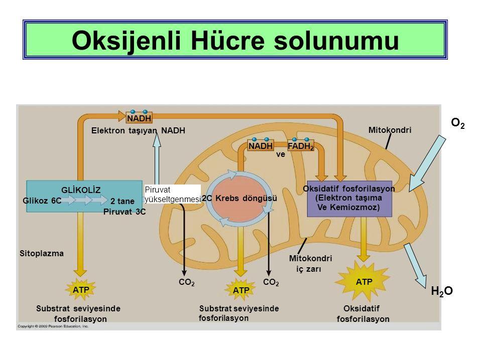 Mitokondri CO 2 NADH ATP Elektron taşıyan NADH NADH 2C Krebs döngüsü GLİKOLİZ 2 tane Piruvat 3C Glikoz 6C ve FADH 2 Substrat seviyesinde fosforilasyon Substrat seviyesinde fosforilasyon Oksidatif fosforilasyon (Elektron taşıma Ve Kemiozmoz) Oksidatif fosforilasyon ATP Sitoplazma Mitokondri iç zarı Oksijenli Hücre solunumu Piruvat yükseltgenmesi O2O2 H2OH2O