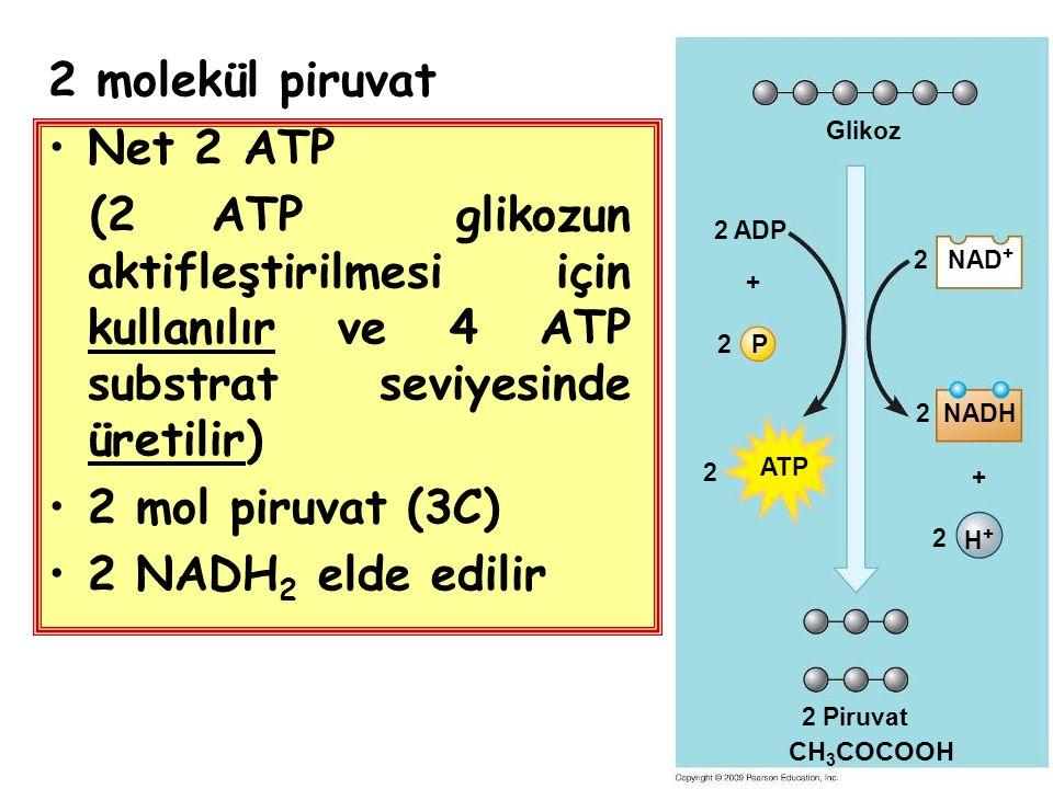 2 molekül piruvat Net 2 ATP (2 ATP glikozun aktifleştirilmesi için kullanılır ve 4 ATP substrat seviyesinde üretilir) 2 mol piruvat (3C) 2 NADH 2 elde edilir Glikoz NAD + + 2 2 ADP NADH2 P2 2 ATP 2 + H+H+ 2 Piruvat CH 3 COCOOH