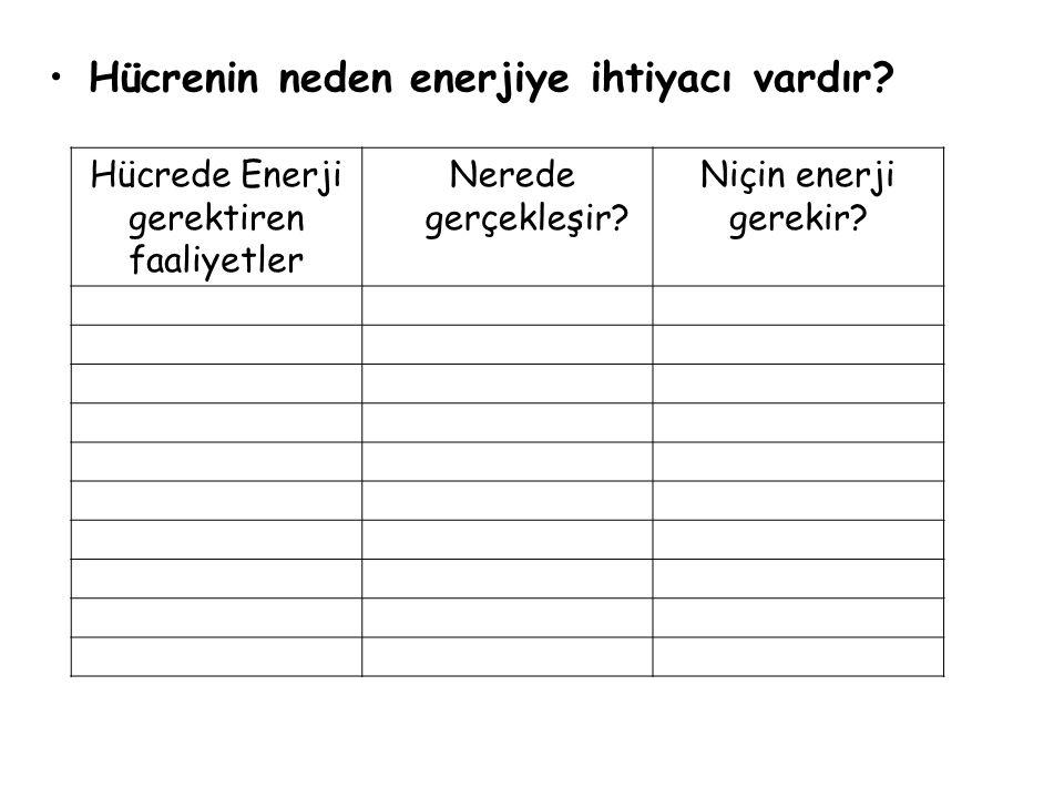 Hücrenin neden enerjiye ihtiyacı vardır.Hücrede Enerji gerektiren faaliyetler Nerede gerçekleşir.