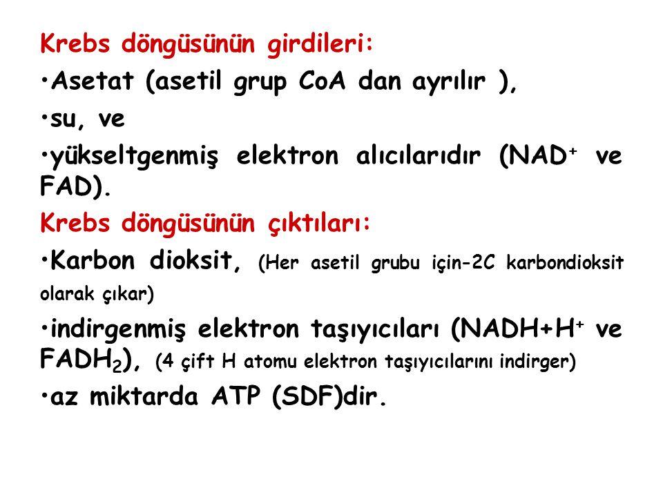 Krebs döngüsünün girdileri: Asetat (asetil grup CoA dan ayrılır ), su, ve yükseltgenmiş elektron alıcılarıdır (NAD + ve FAD).