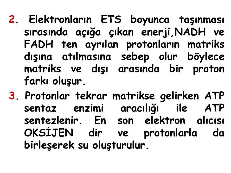 2. Elektronların ETS boyunca taşınması sırasında açığa çıkan enerji,NADH ve FADH ten ayrılan protonların matriks dışına atılmasına sebep olur böylece