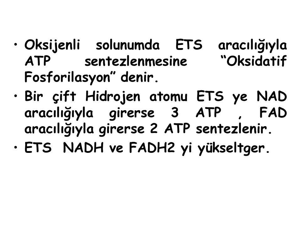 Oksijenli solunumda ETS aracılığıyla ATP sentezlenmesine Oksidatif Fosforilasyon denir.