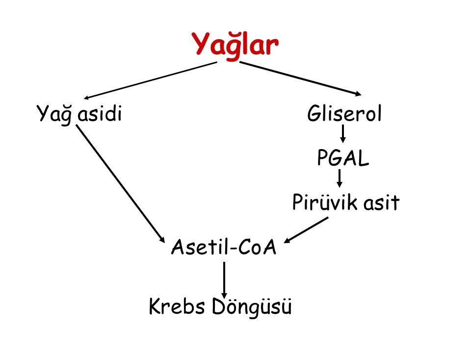 Yağlar Yağ asidiGliserol PGAL Pirüvik asit Asetil-CoA Krebs Döngüsü