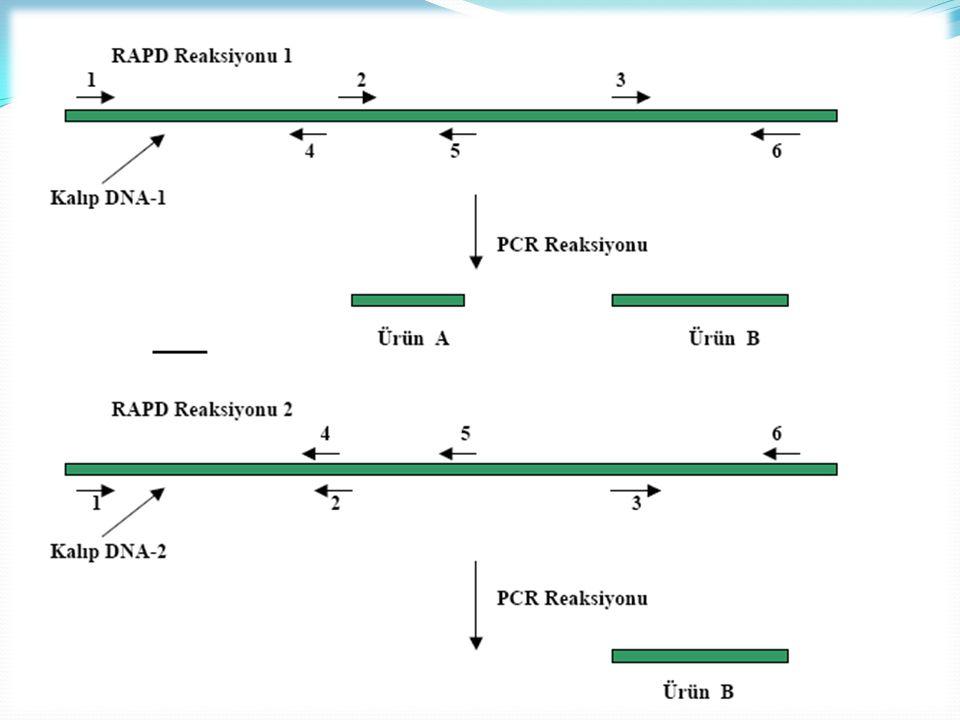 RFLP: Restriksiyon endonükleazlar, bir enzim çeşidi olup DNA'nın genel olarak 4,5 veya 6bp uzunluğundaki, bilinen nukleotit dizilimlerini tanıyıp, spesifik olarak bu noktalardan keserler.