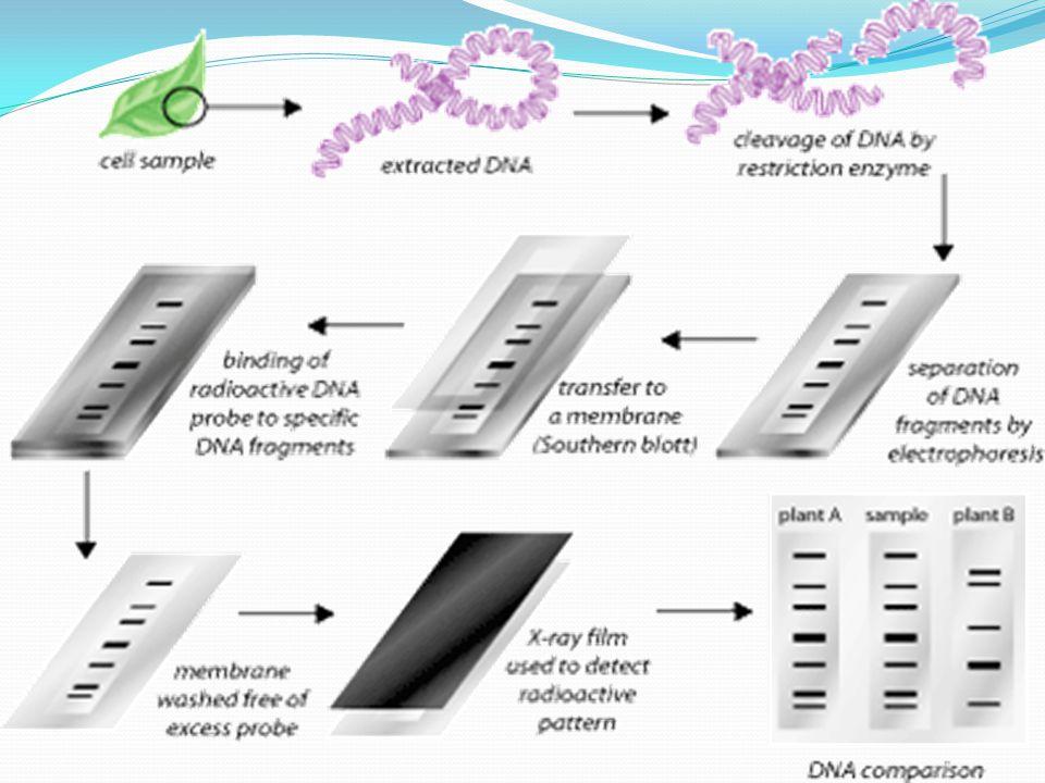 Mikrosatellit DNA Marker: Çok hücrelilerde sıralı tekrar gösteren nukleotid dizilimlerinin bulunduğu 1968 yılında yapılan çalışmalarla ortaya çıkarılmıştır.