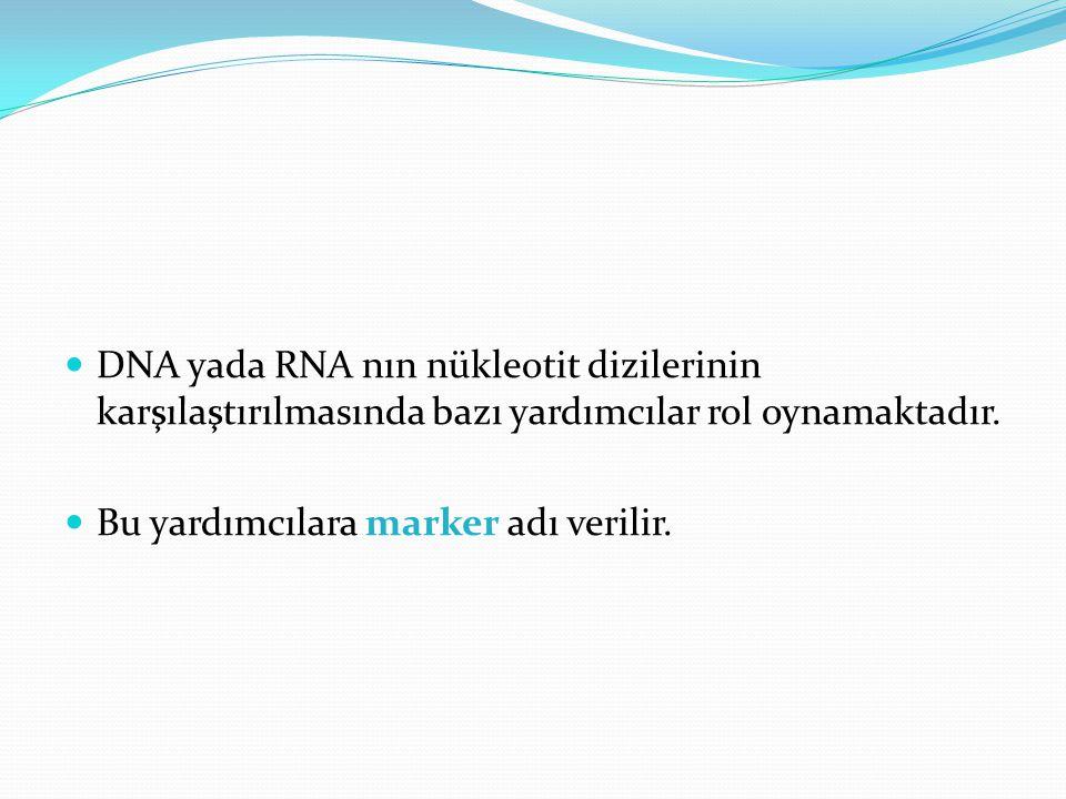 DNA yada RNA nın nükleotit dizilerinin karşılaştırılmasında bazı yardımcılar rol oynamaktadır. Bu yardımcılara marker adı verilir.