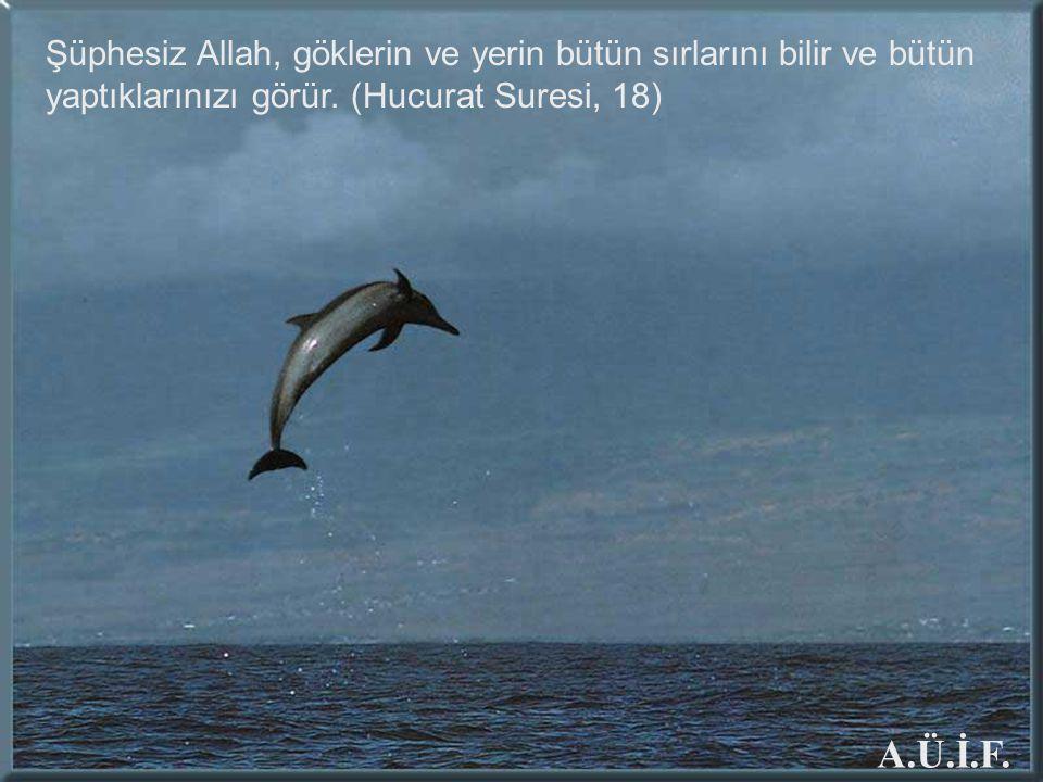 Şüphesiz Allah, göklerin ve yerin bütün sırlarını bilir ve bütün yaptıklarınızı görür. (Hucurat Suresi, 18) A.Ü.İ.F.