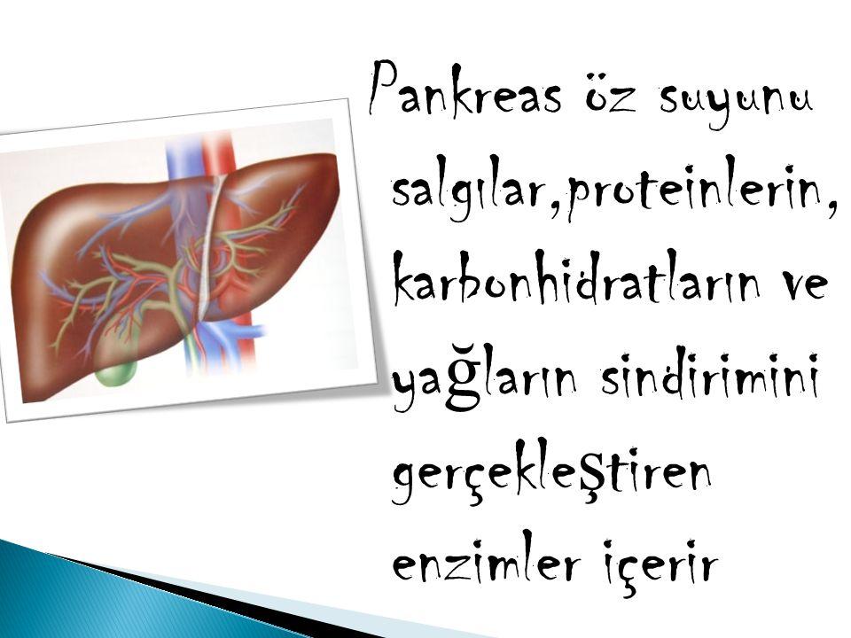Pankreas öz suyunu salgılar,proteinlerin, karbonhidratların ve ya ğ ların sindirimini gerçekle ş tiren enzimler içerir