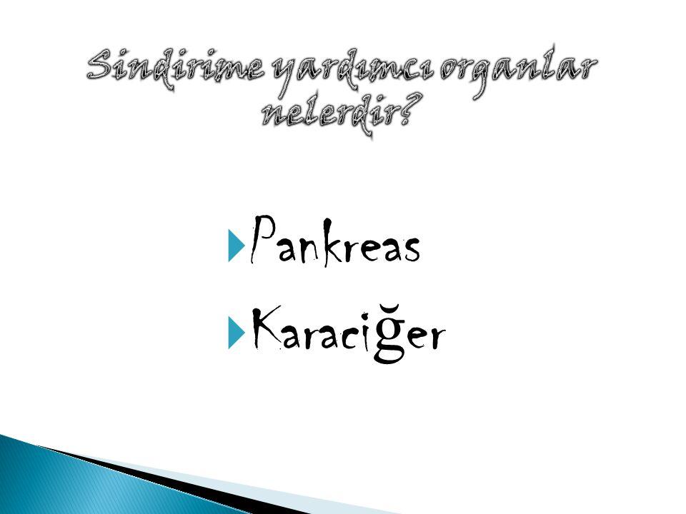  Pankreas  Karaci ğ er