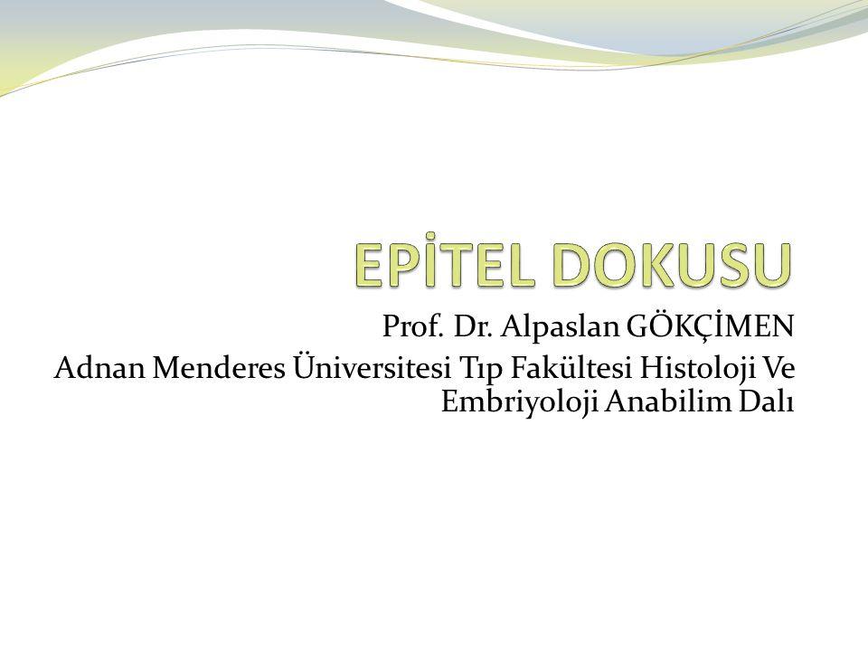 Özel Epiteli Tipleri 1.Yalancı çok katlı epitel (Psödostratifiye) 2.