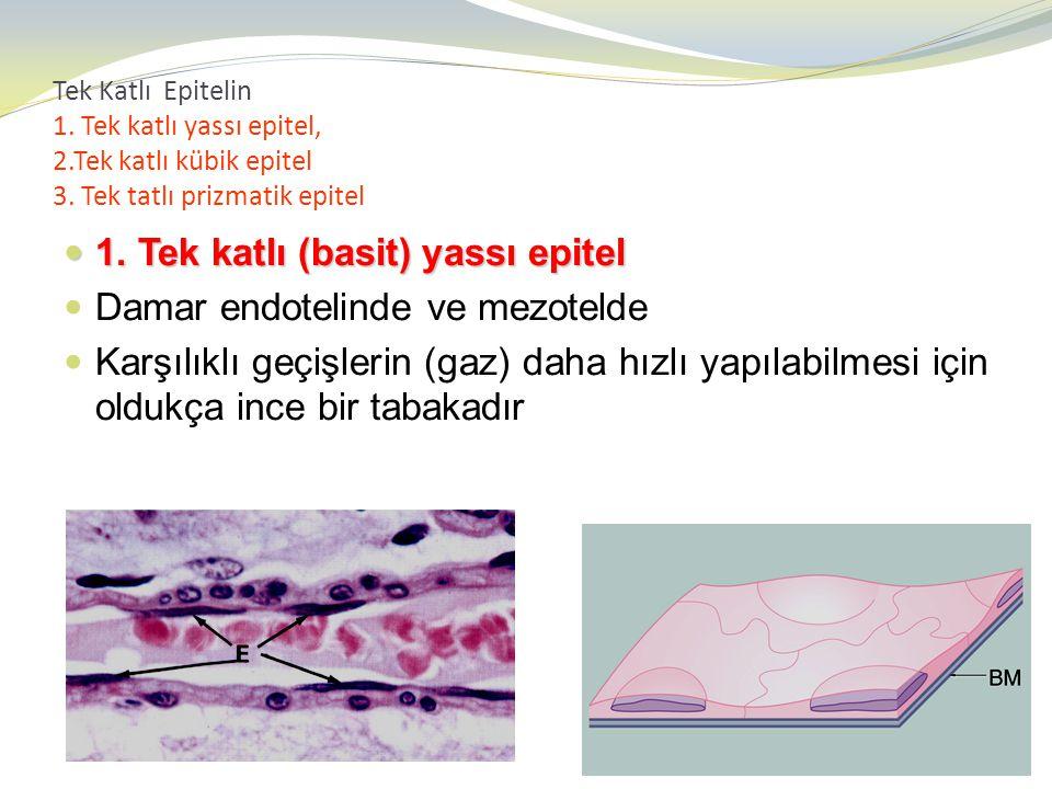 Tek Katlı Epitelin 1. Tek katlı yassı epitel, 2.Tek katlı kübik epitel 3. Tek tatlı prizmatik epitel 1. Tek katlı (basit) yassı epitel 1. Tek katlı (b