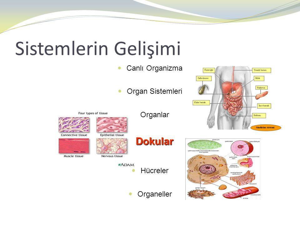 Sistemlerin Gelişimi Canlı Organizma Organ Sistemleri Organlar Dokular Dokular Hücreler Organeller