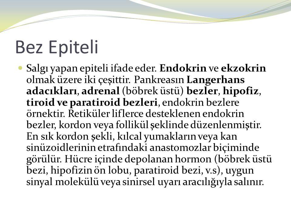 Bez Epiteli Salgı yapan epiteli ifade eder. Endokrin ve ekzokrin olmak üzere iki çeşittir. Pankreasın Langerhans adacıkları, adrenal (böbrek üstü) bez