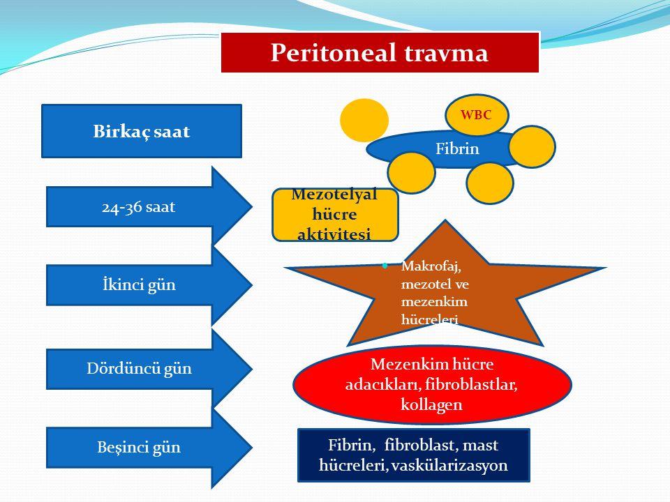 Peritoneal travma Birkaç saat Fibrin WBC 24-36 saat Mezotelyal hücre aktivitesi Beşinci gün Makrofaj, mezotel ve mezenkim hücreleri Dördüncü gün Mezen