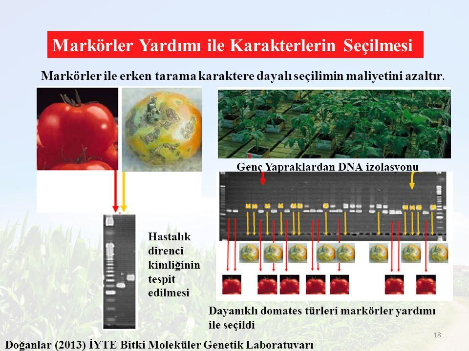 Dayanıklı domates türleri markörler yardımı ile seçildi Hastalık direnci kimliğinin tespit edilmesi Genç Yapraklardan DNA izolasyonu Markörler ile erk