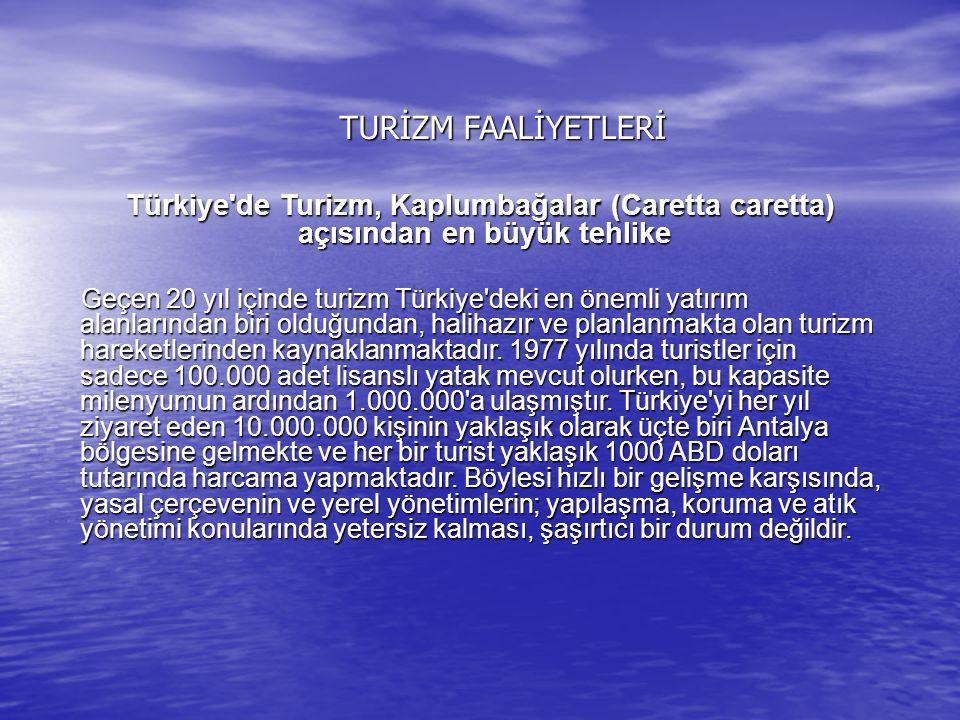 TURİZM FAALİYETLERİ Türkiye'de Turizm, Kaplumbağalar (Caretta caretta) açısından en büyük tehlike Türkiye'de Turizm, Kaplumbağalar (Caretta caretta) a