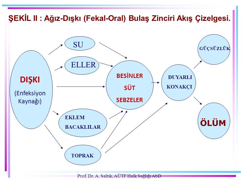 Prof. Dr. A. Saltık, AÜTF Halk Sağlığı AbD ŞEKİL II : Ağız-Dışkı (Fekal-Oral) Bulaş Zinciri Akış Çizelgesi. DIŞKI (Enfeksiyon Kaynağı) SU ELLER EKLEM
