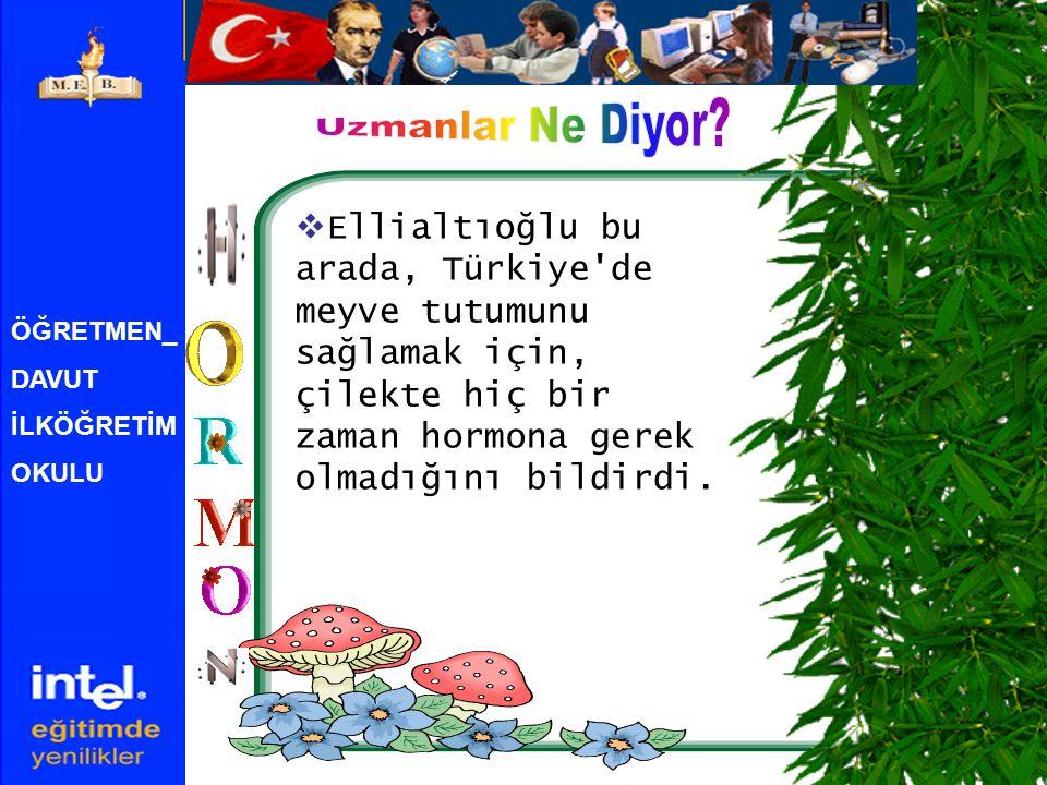 ÖĞRETMEN_ DAVUT İLKÖĞRETİM OKULU  Ellialtıoğlu bu arada, Türkiye'de meyve tutumunu sağlamak için, çilekte hiç bir zaman hormona gerek olmadığını bild