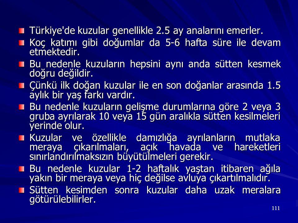 111 Türkiye'de kuzular genellikle 2.5 ay analarını emerler. Koç katımı gibi doğumlar da 5-6 hafta süre ile devam etmektedir. Bu nedenle kuzuların heps