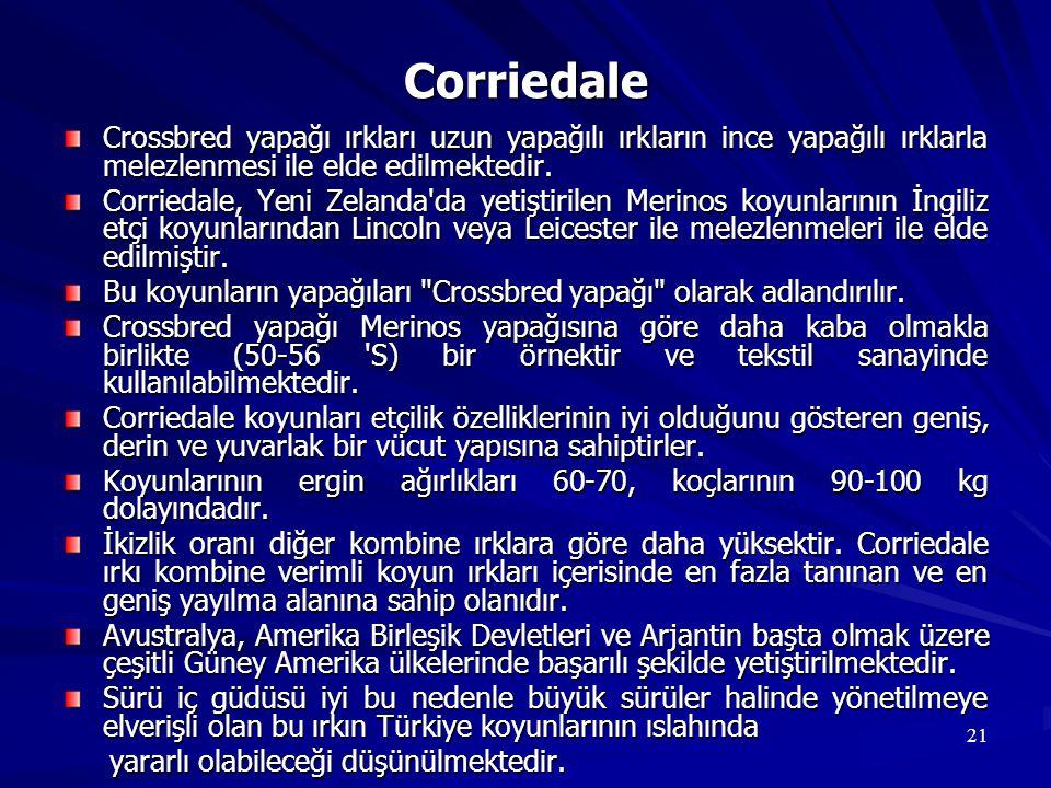 21 Corriedale Crossbred yapağı ırkları uzun yapağılı ırkların ince yapağılı ırklarla melezlenmesi ile elde edilmektedir. Corriedale, Yeni Zelanda'da y