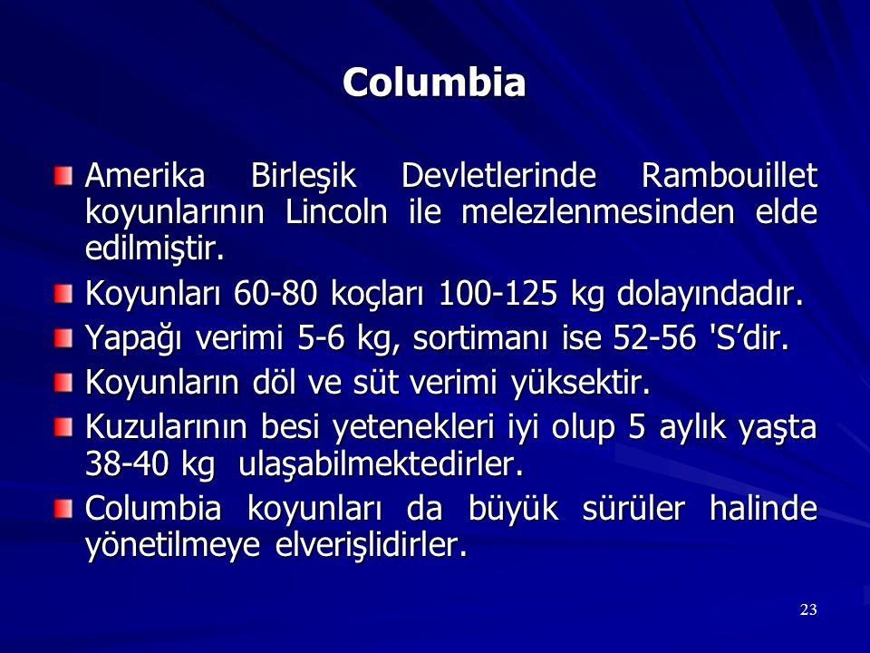 23 Columbia Amerika Birleşik Devletlerinde Rambouillet koyunlarının Lincoln ile melezlenmesinden elde edilmiştir. Koyunları 60-80 koçları 100-125 kg d