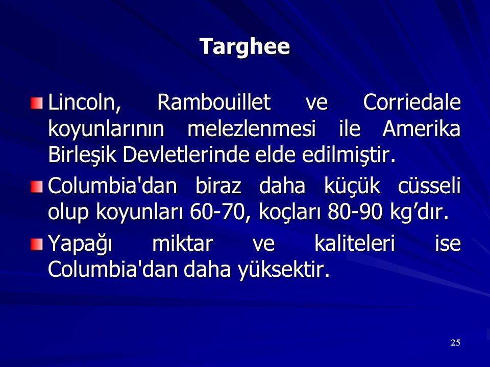 25 Targhee Lincoln, Rambouillet ve Corriedale koyunlarının melezlenmesi ile Amerika Birleşik Devletlerinde elde edilmiştir. Columbia'dan biraz daha kü