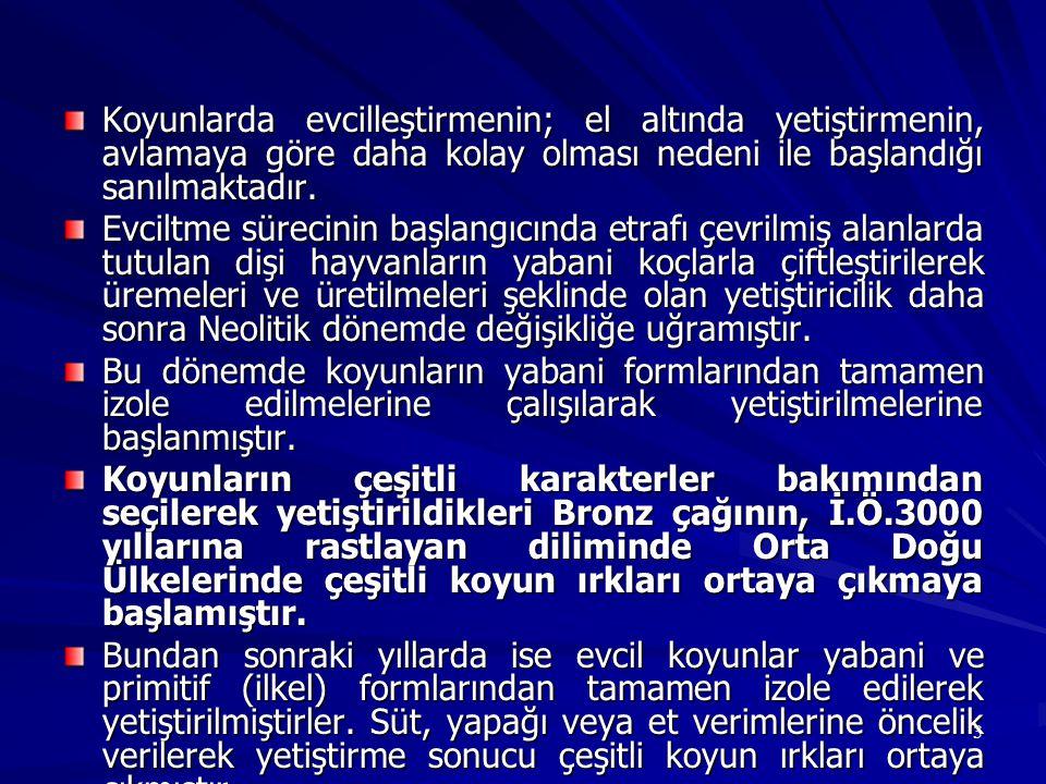 94 Yerleşik Köy Sürüleri Şeklinde Koyunculuk Türkiye nin koyun yetiştiriciliği yapılan tüm bölgelerinde rastlanan bir yetiştiricilik tarzıdır.
