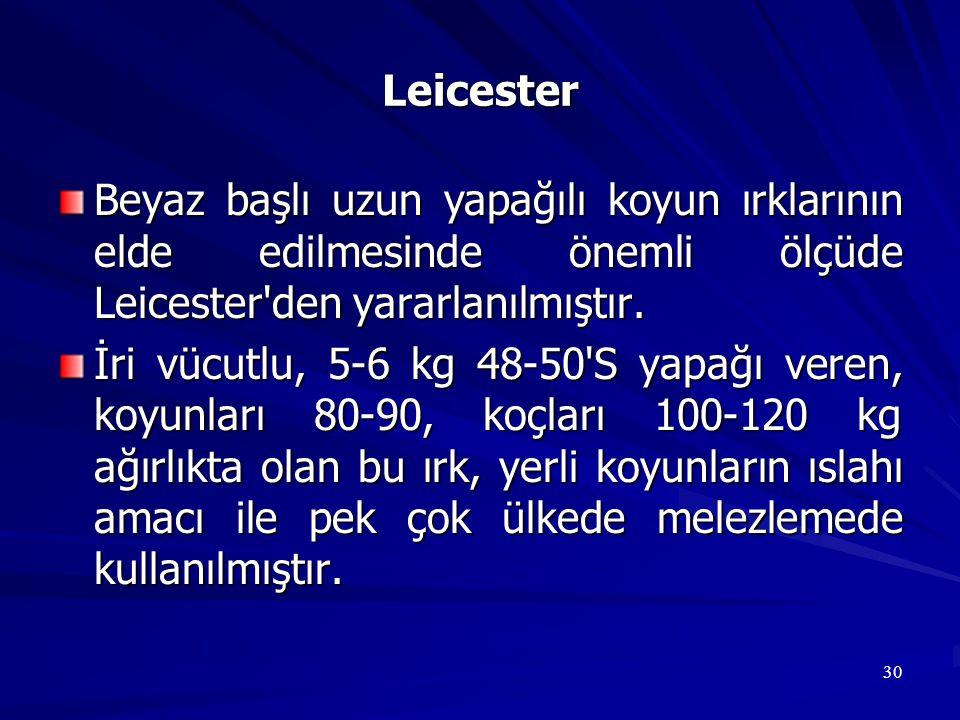 30 Leicester Beyaz başlı uzun yapağılı koyun ırklarının elde edilmesinde önemli ölçüde Leicester'den yararlanılmıştır. İri vücutlu, 5-6 kg 48-50'S yap