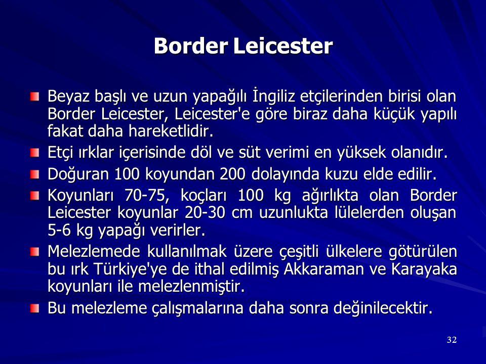 32 Border Leicester Beyaz başlı ve uzun yapağılı İngiliz etçilerinden birisi olan Border Leicester, Leicester'e göre biraz daha küçük yapılı fakat dah
