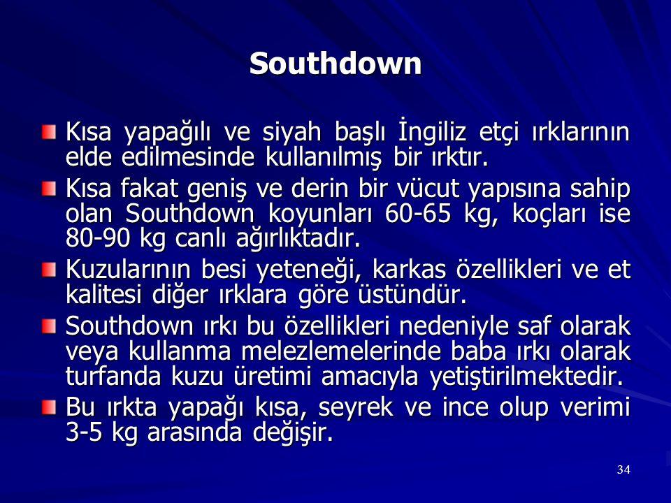 34 Southdown Kısa yapağılı ve siyah başlı İngiliz etçi ırklarının elde edilmesinde kullanılmış bir ırktır. Kısa fakat geniş ve derin bir vücut yapısın