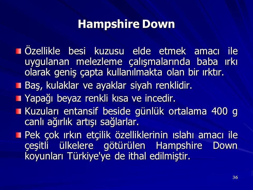 36 Hampshire Down Özellikle besi kuzusu elde etmek amacı ile uygulanan melezleme çalışmalarında baba ırkı olarak geniş çapta kullanılmakta olan bir ır