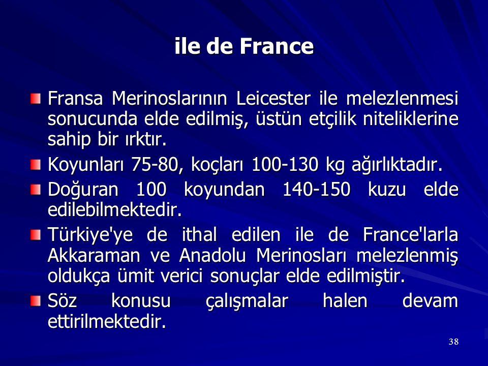 38 ile de France Fransa Merinoslarının Leicester ile melezlenmesi sonucunda elde edilmiş, üstün etçilik niteliklerine sahip bir ırktır. Koyunları 75-8