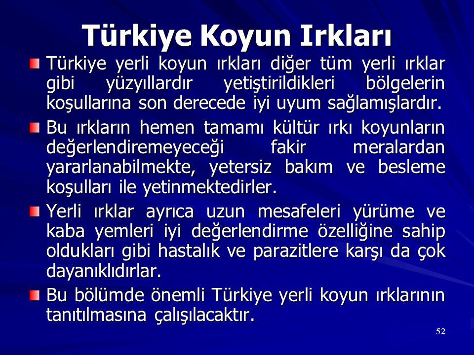52 Türkiye Koyun Irkları Türkiye yerli koyun ırkları diğer tüm yerli ırklar gibi yüzyıllardır yetiştirildikleri bölgelerin koşullarına son derecede iy