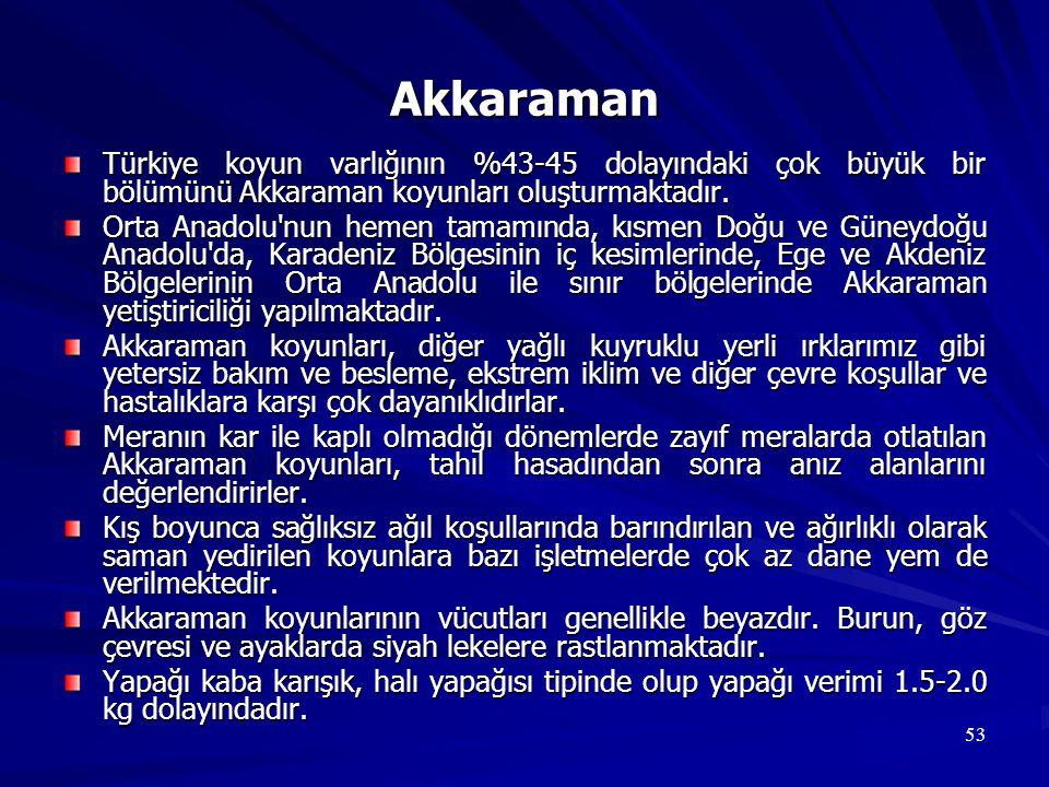 53 Akkaraman Türkiye koyun varlığının %43-45 dolayındaki çok büyük bir bölümünü Akkaraman koyunları oluşturmaktadır. Orta Anadolu'nun hemen tamamında,