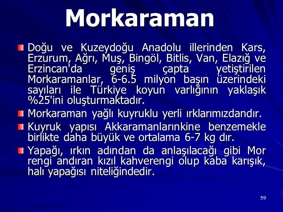 59 Morkaraman Doğu ve Kuzeydoğu Anadolu illerinden Kars, Erzurum, Ağrı, Muş, Bingöl, Bitlis, Van, Elazığ ve Erzincan'da geniş çapta yetiştirilen Morka