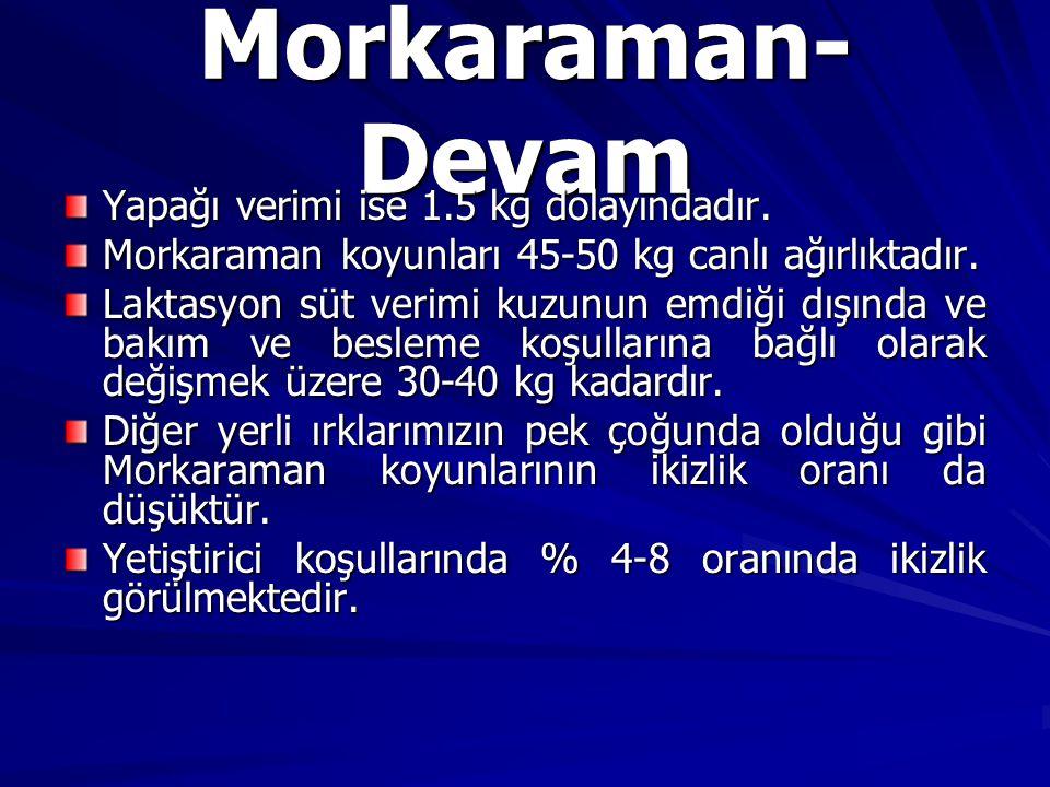 Morkaraman- Devam Yapağı verimi ise 1.5 kg dolayındadır. Morkaraman koyunları 45-50 kg canlı ağırlıktadır. Laktasyon süt verimi kuzunun emdiği dışında