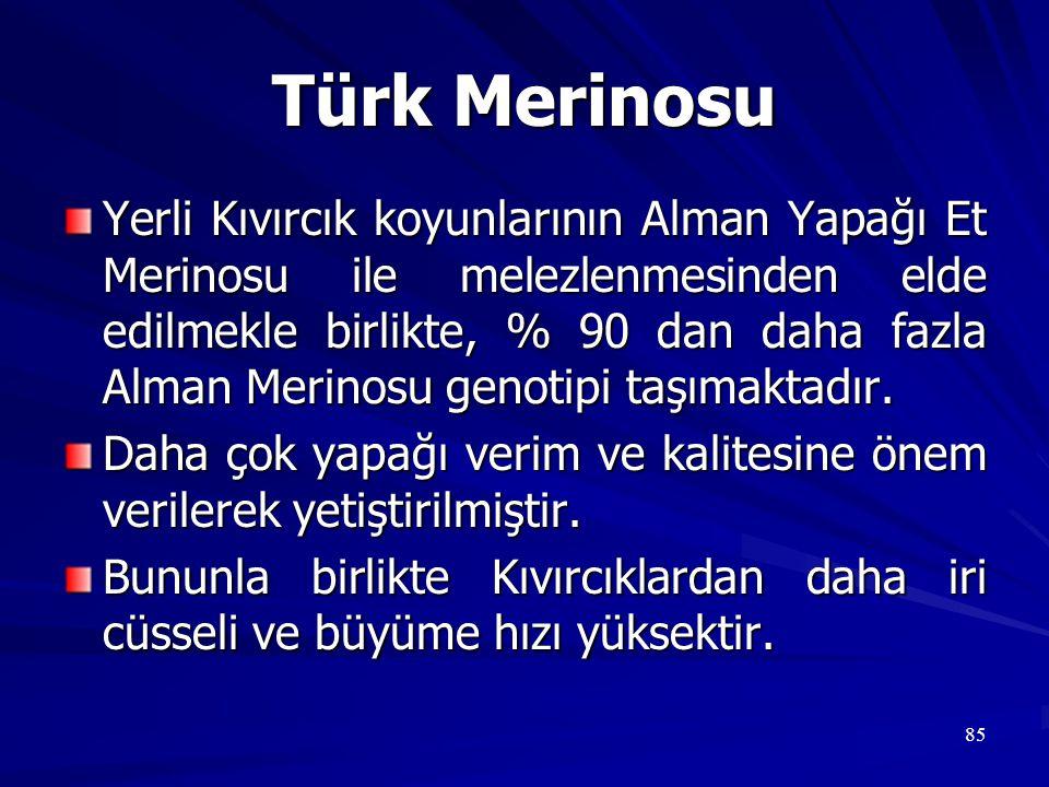 85 Türk Merinosu Yerli Kıvırcık koyunlarının Alman Yapağı Et Merinosu ile melezlenmesinden elde edilmekle birlikte, % 90 dan daha fazla Alman Merinosu