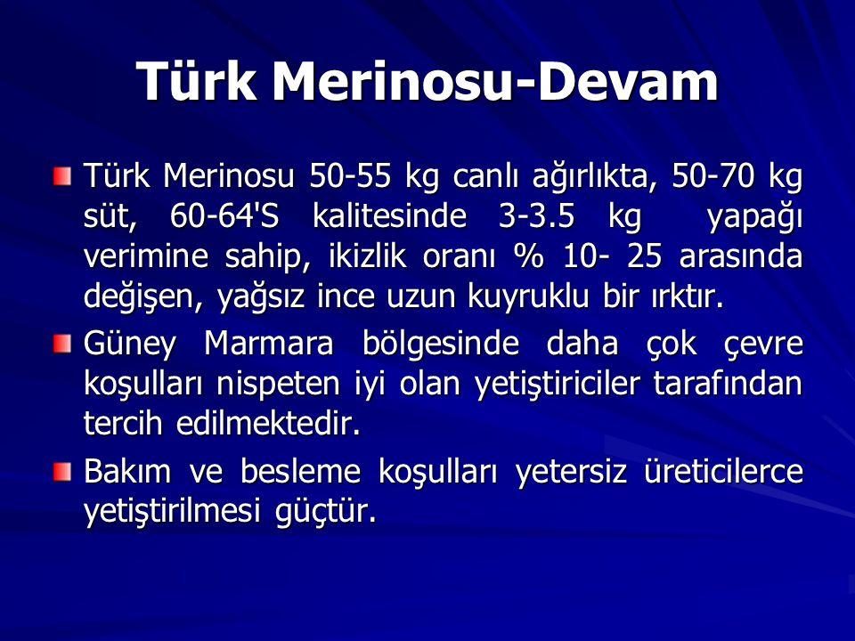 Türk Merinosu 50-55 kg canlı ağırlıkta, 50-70 kg süt, 60-64'S kalitesinde 3-3.5 kg yapağı verimine sahip, ikizlik oranı % 10- 25 arasında değişen, yağ