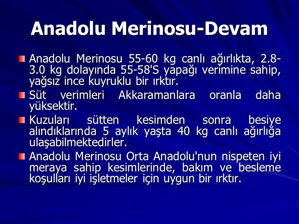 Anadolu Merinosu 55-60 kg canlı ağırlıkta, 2.8- 3.0 kg dolayında 55-58'S yapağı verimine sahip, yağsız ince kuyruklu bir ırktır. Süt verimleri Akkaram